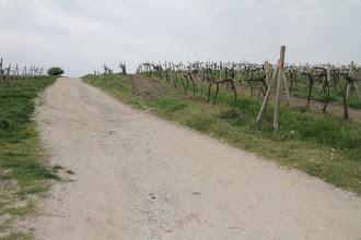 Photo: Trasa je značená ich vlastnými značkami, ako vidno na stĺpe vpravo. Na úvod vedie cik-cak cez vinohrady