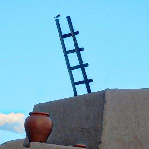 Ladder Bird3.jpeg