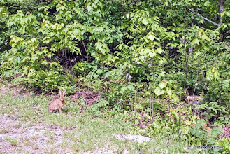 Photo: Can you see the wildlife at Stillwater State Park