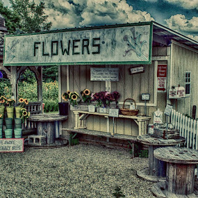 the flower stand by Beth Krzes - Flowers Flower Gardens (  )