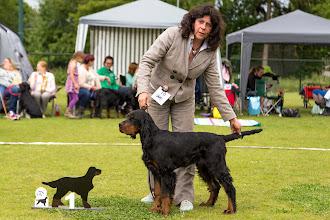 Photo: Jongste Puppyklas reuen / Minor Puppy class dogs New Lord Lennox of the Beautiful Darkness