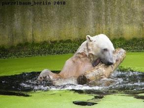Photo: Ein gutgelaunter Knut :-)