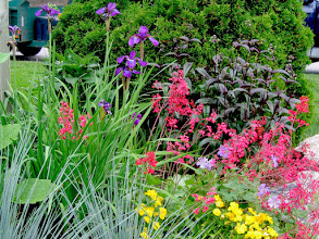 Photo: Texture and foliage colour are first considerations but flowers don't hurt either - Siberian Iris, Coral Bells and 4 O'clocks with purple Husker Red Beardstongue for contrast.