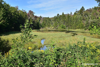 Photo: Marshy areas like this provide important habitat for plants and animals at Woodford State Park by Bill Steele