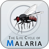 The Life Cycle of Malaria
