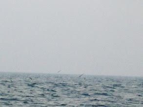 Photo: うちも追い続けますが、沈みが速く、なかなか・・・。 鳥の数はものすごいけど・・。