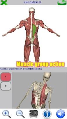 Visual Anatomy 2のおすすめ画像2