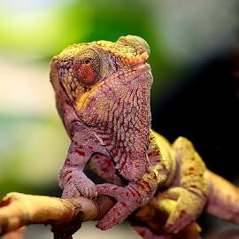 Alien by Gérard CHATENET - Animals Reptiles
