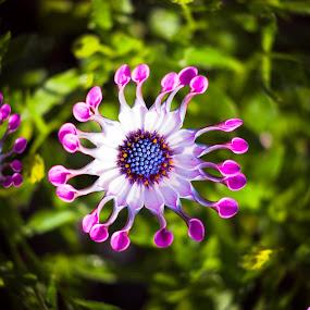 by Kiril Kolev - Uncategorized All Uncategorized ( spring flowers, flowers, summer flower, flower )