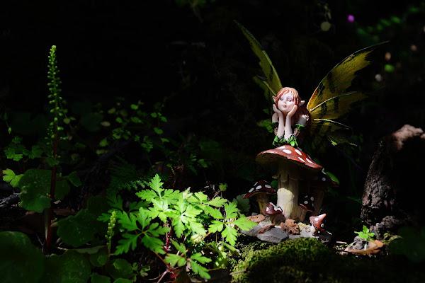 Nel bosco di -Faby-