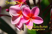 Photo: Stacy Dean_Erlinda golez Burfield_2014