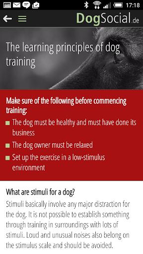 Dog Training Basics Philippines