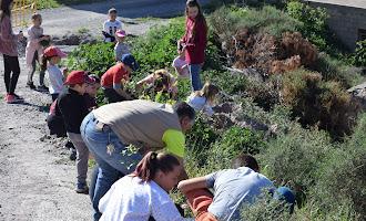 Niños de Vícar plantan 80 encimas cerca del pueblo