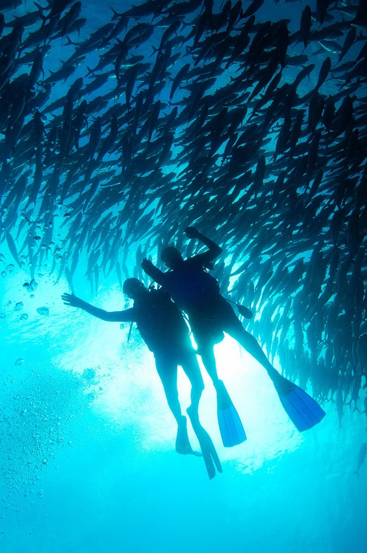 Gizo Solomon Islands (25 Best Dive Sites in the World to Put on Your Bucket List).