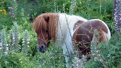 Photo: We meet a pony