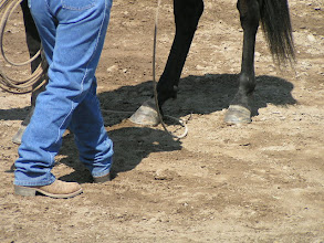 Photo: Now taking the slack out of the loop to come down around Tilly's fetlock.