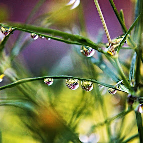 by Julie Ahmed - Abstract Water Drops & Splashes