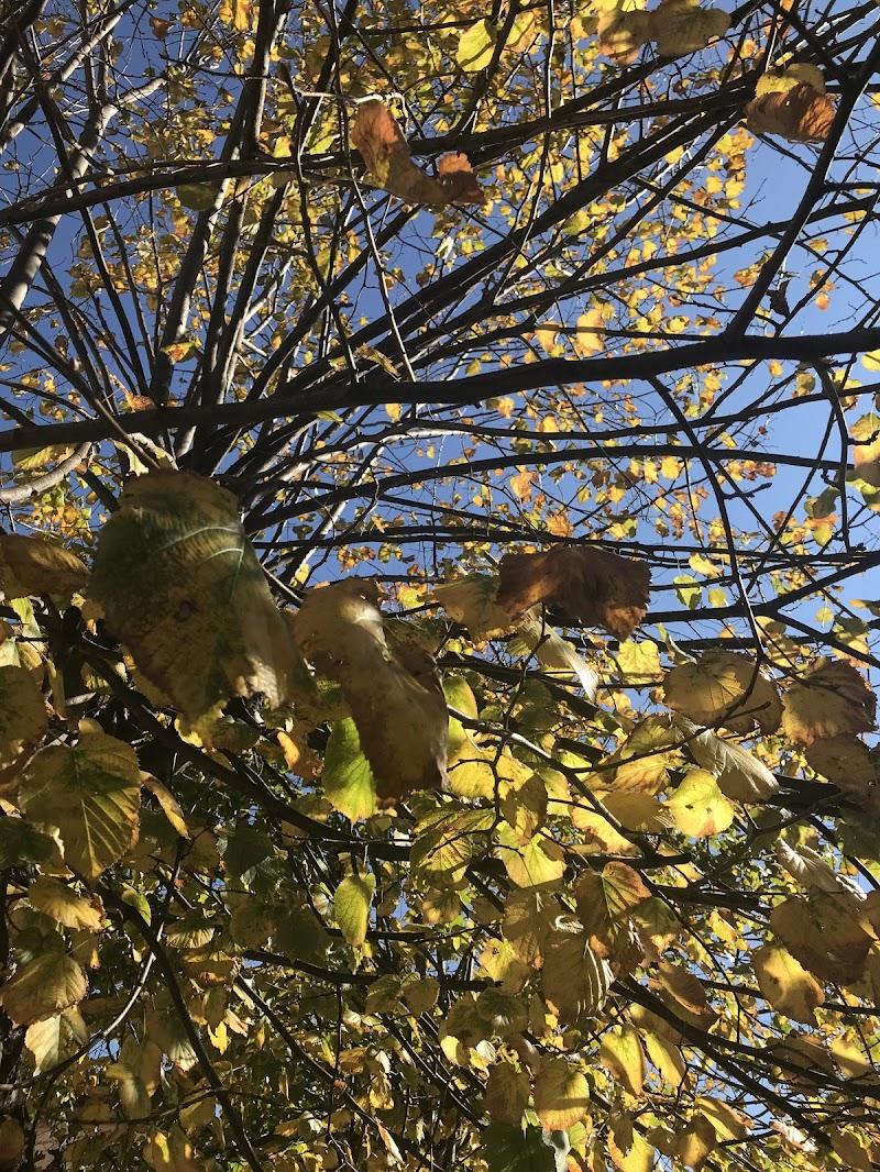foglie gialle giu di antonioleo