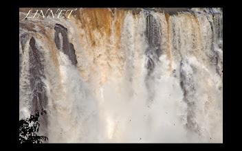 Photo: イグアスの滝付近を飛ぶオオムジアマツバメ Iguazu Falls