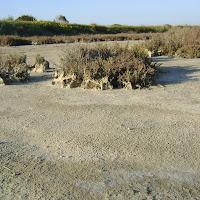 in tranquillità desertica di
