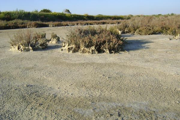in tranquillità desertica di ariosa