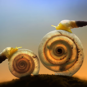 Facing the King by Dhimas Prastowo - Animals Other ( #small, #shell, #snails, #photography, #macro, #canon )