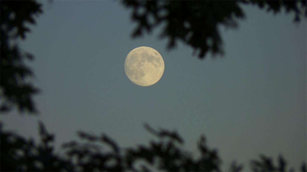 Moon-Up 2.jpg