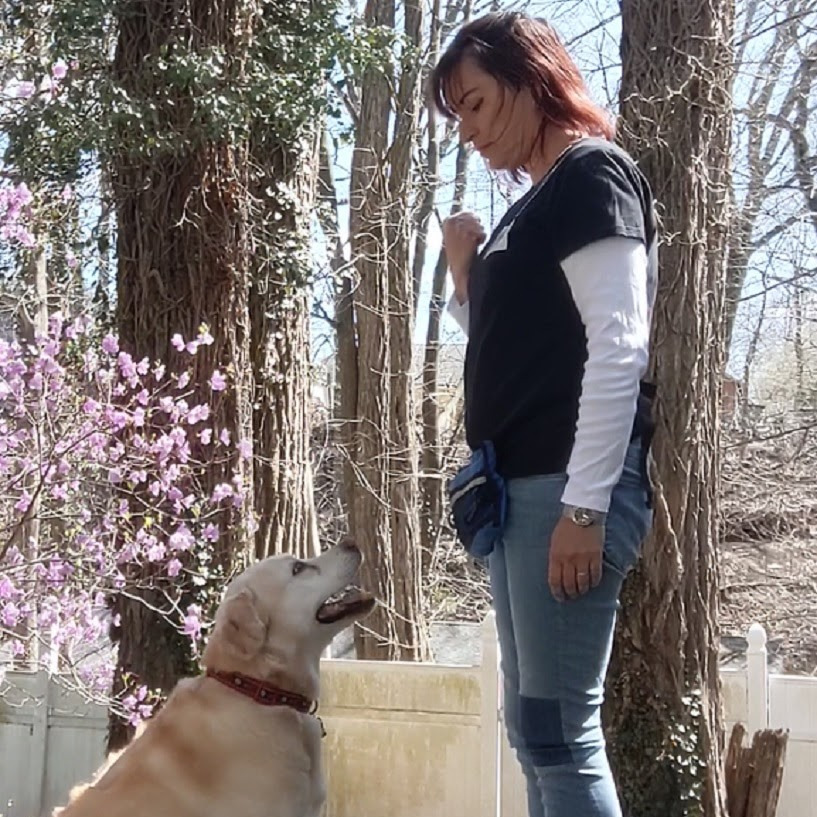 Walk and train dog training sessions in Westchester County