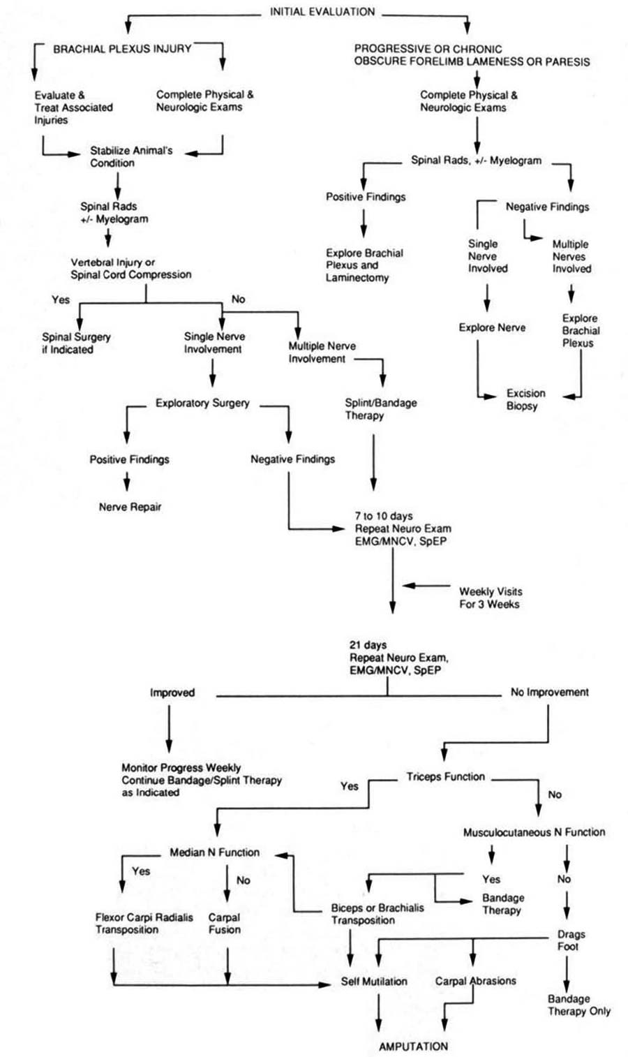 Algorithm of serial evaluation and treatment options for brachial plexus injuries