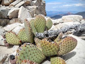 Photo: Cactus