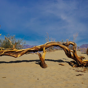 Death Valley by Fabienne Lawrence - Landscapes Deserts ( bare tree, death valley, tree, desert, landscape )
