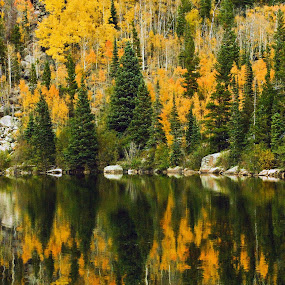 Autumn Reflections at Bear Lake by Brian Kerls - Landscapes Forests ( estes park, fall colors, travel, yellow, hiking, tree, nature, autumn, camping, bear lake, forest, lake, tourism, destination, aspens in fall;, aspen glade, aspen grove, outdoors, trees, western, natural, golden, reflection, america, waterscape, colorful, back packing, splendor, plants, reflections, landscape, usa, mountains, aspen trees, autumn colors, aspens, gold, pond, abstract, water, aspen forest, colorado, colorado landscape, scenic, field, wilderness, fall, october, scenery )