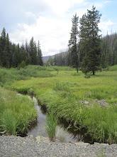Photo: Long Swamp