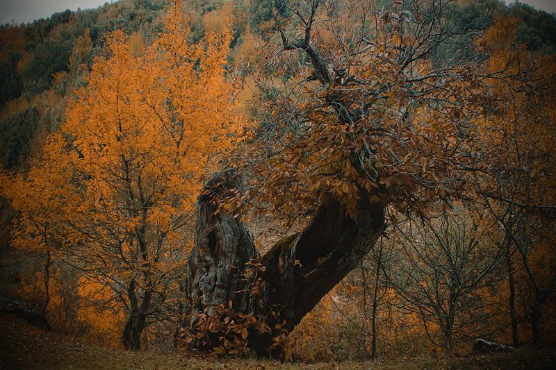 Autumn in orange di Giorgia_79