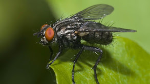Insect Evidence thumbnail