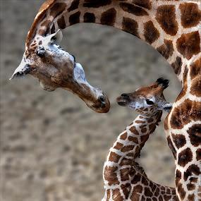 by Annemarie Rulos  - Animals Other Mammals (  )