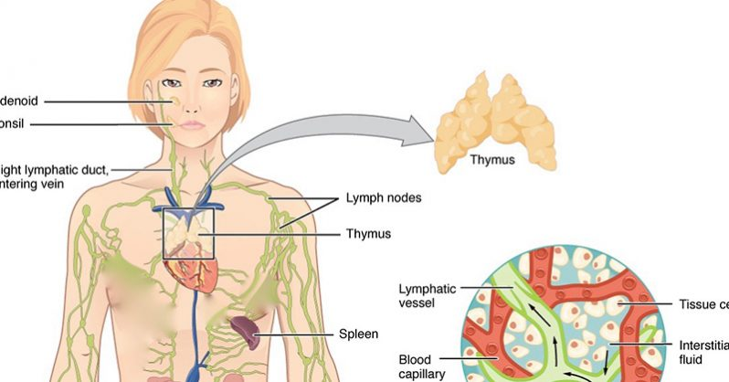 The Lymphatic System Is How Cancer Spreads: 4 Ways to Keep It Healthy