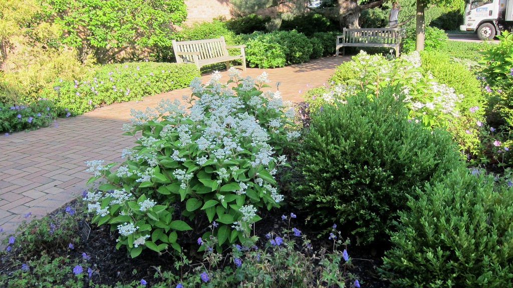 perennial garden plan evergreen shrubs layer   pretty purple door, Natural flower