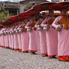 Nuns in line by Mike Mulligan - People Street & Candids ( nuns, myanmar, pattern, street, daylight, , Buddhism )