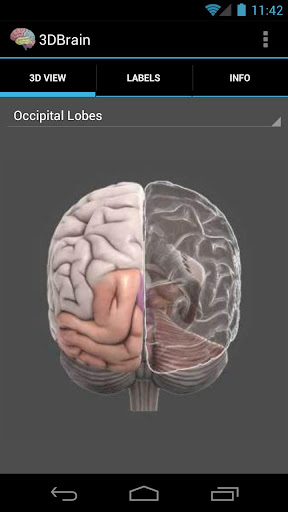 3D Brain screenshot for Android