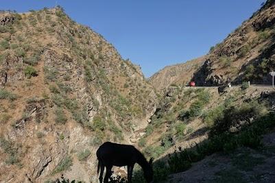 Donkey grazes in a narrow canyon.