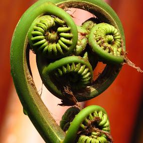 Fern by Randi Hodson - Nature Up Close Leaves & Grasses ( fern,  )