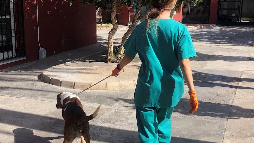 Una trabajadora del centro con un perro.