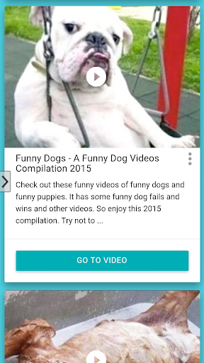 Funny Dogs HD