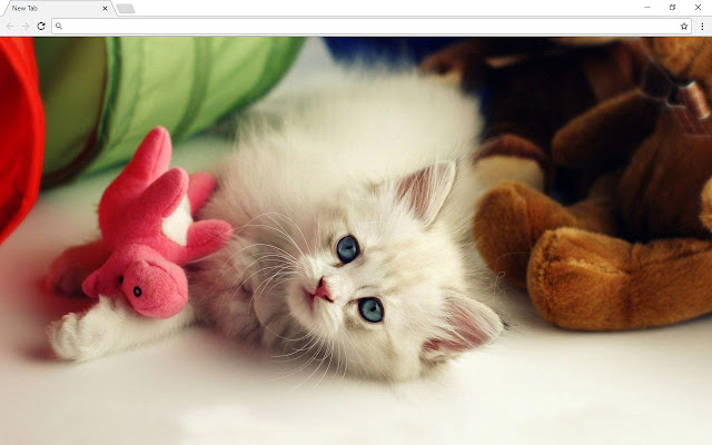 Cute cats and kittens wallpapers chrome web store cute cats and kittens is an awesome new tab product for all cute cats and kittens lovers out there altavistaventures Images