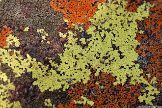 Photo: Lichens growing in the Marakele National Park, South Africa.