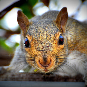 What? by Emily Vickers - Animals Other Mammals ( nature, whiskers, wildlife, rodent, squirrel, eyes )