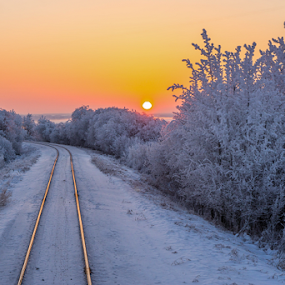 On the Road Again by Charles Adam - Landscapes Sunsets & Sunrises ( cool, rails, hoar frost, crisp, railroad, morning glory, valley, tracks, travel, landscape, morning, glow, sun, early morning, dawn, railway, cold, bushes, fog, snow, rail, trees, train, sunrise, early,  )