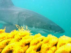 Photo: #010-Sous l'eau, la visibilité n'est pas très bonne, environ 2 à 3 mètres maxi.