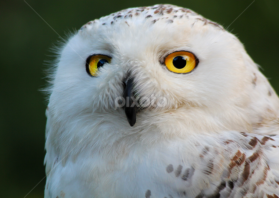 by Lis Ruas - Animals Birds